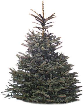 Weihnachtsbaume Aus Dem Odenwald Kaufen Christbaum Center
